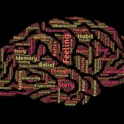 脳と言い訳